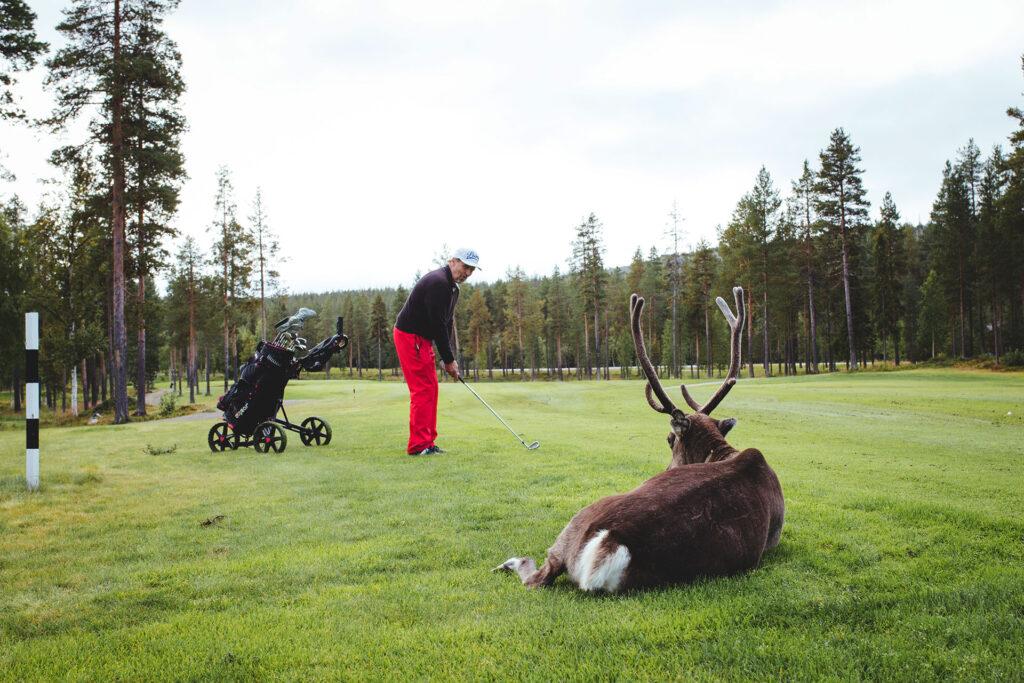 Panorama Open on golfkisa Levillä, Lapissa, jossa voi pelatessa tavata poroja kentällä!